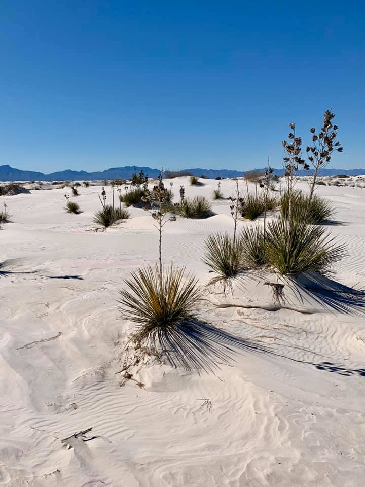 White Sands with plants